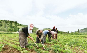 BAĞ-KUR'lu Çiftçiler Nasıl Emekli Olur?